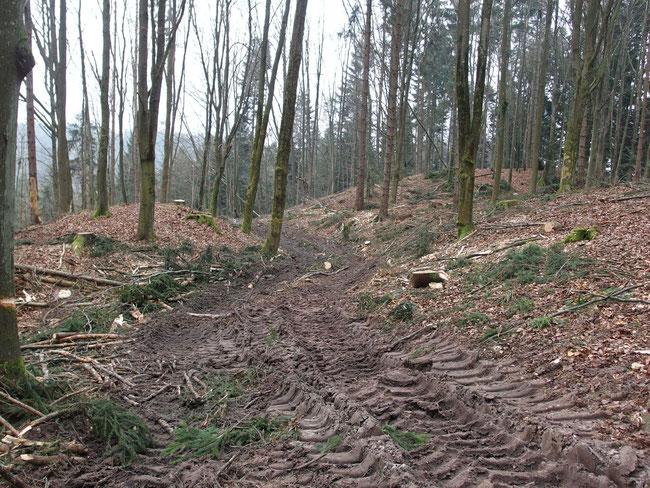 2017 fanden ausgedehnte Waldarbeiten im Bereich des Burgstalls statt