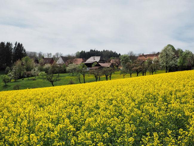 Blick auf Gundelshausen