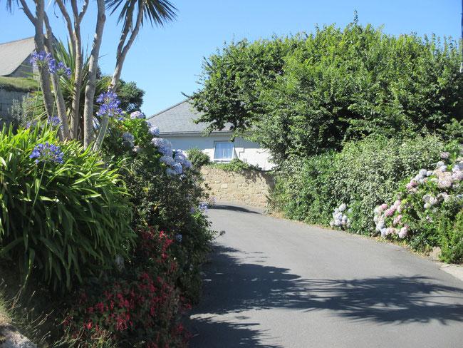 Kein Azoren und trotzdem mediteran: St. Marys