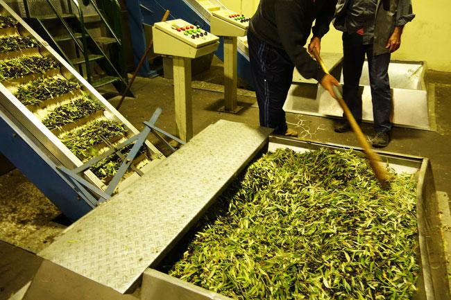 dans le moulin à olives