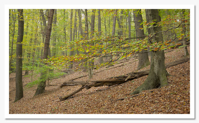 Herbst im Wienerwald-Mauerbach-nö-christian rebl-cr-foto.at