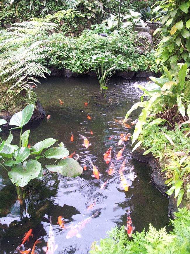 Teich mit Wasserpflanzen und Uferbepflanzung