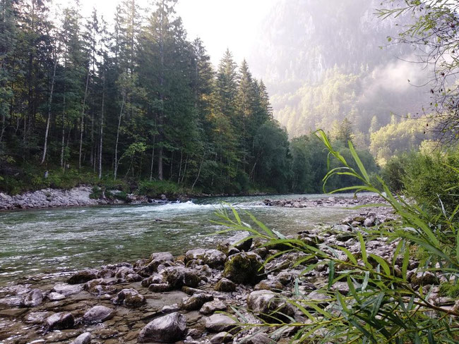 Helli Welli am Campingplatz Wildalpen