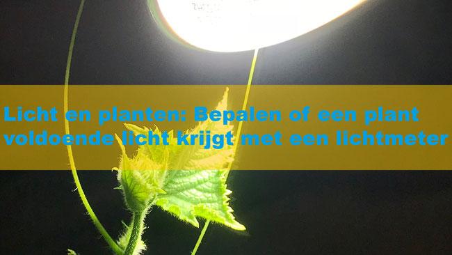 Licht en planten: Bepalen of een plant voldoende licht krijgt met een lichtmeter
