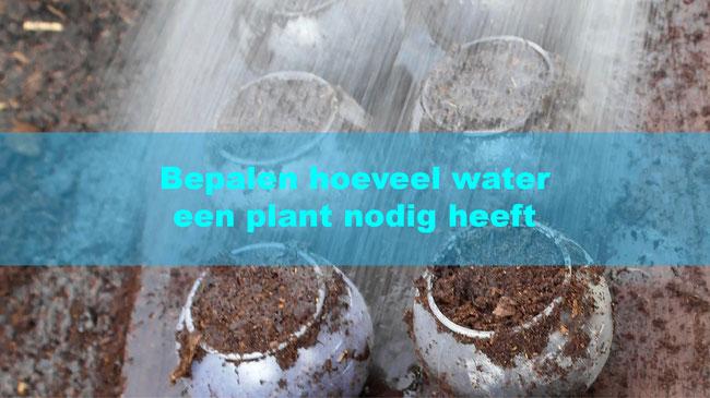 Bepalen hoeveel water een plant nodig heeft