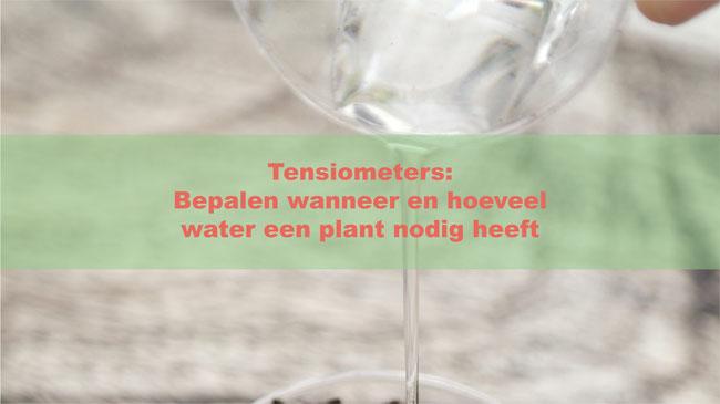 Tensiometers: Bepalen wanneer en hoeveel water een plant nodig heeft