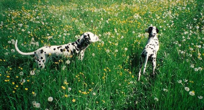 Gando und Feger beim Frühlingsspaziergang