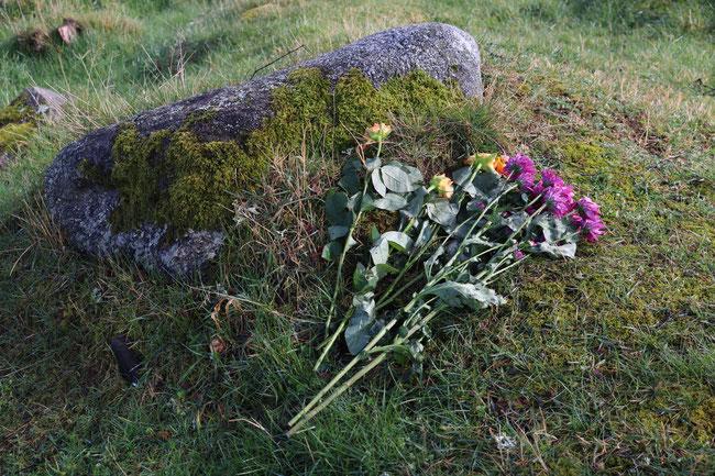 Roses at Culloden