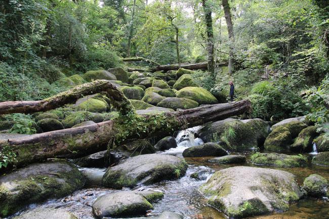 Beckey Falls Dartmoor
