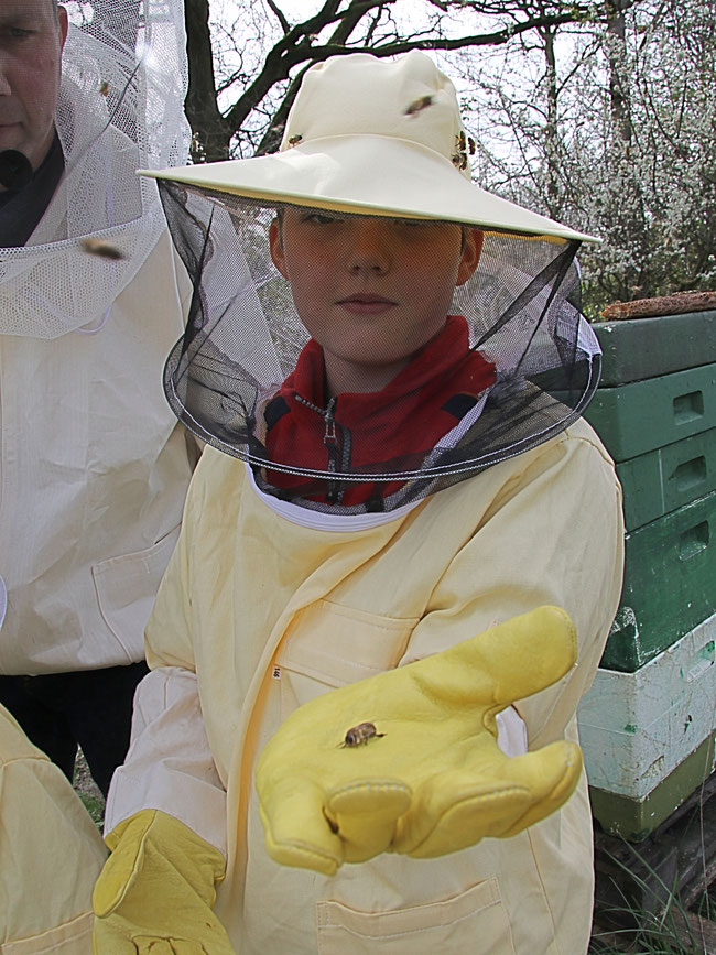 2012 mein erster Kontakt zu den Bienen