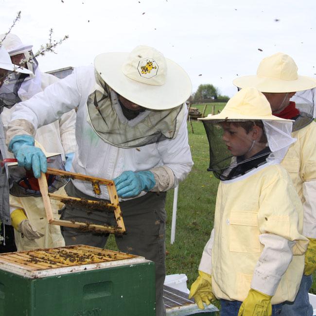 2012 Mein erster Kontakt zu den Bienen.