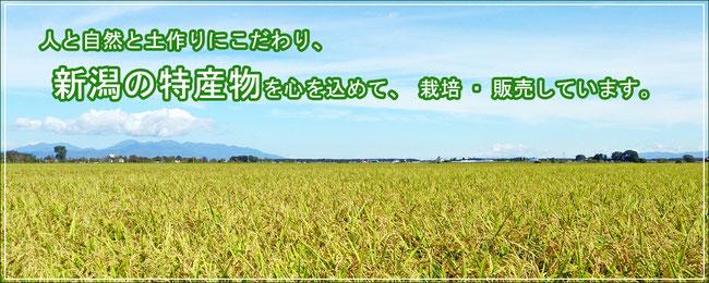 人と自然と土作りにこだわり、新潟の特産物を心を込めて、栽培・販売しています。