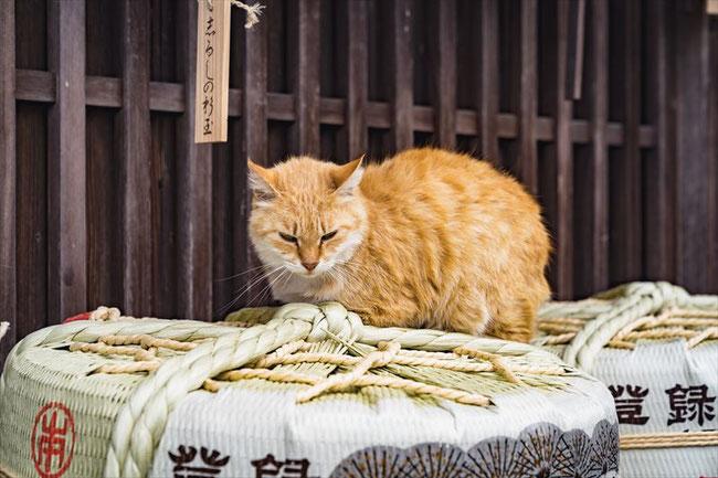 伊勢神宮猫