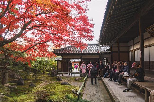 京都栄摂院の枯山水庭園と紅葉