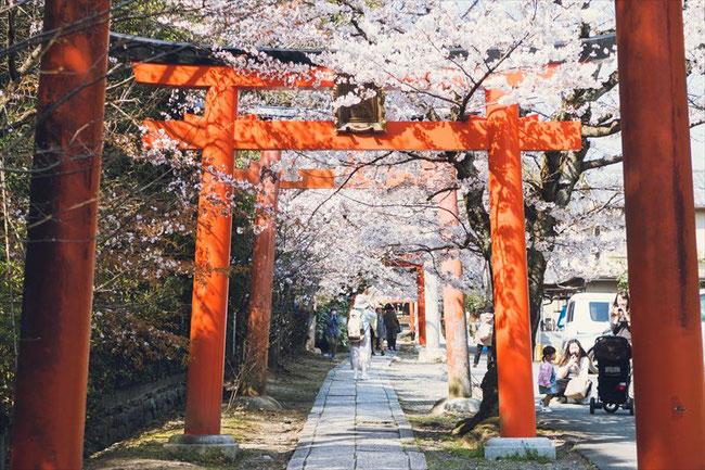 (京都桜の穴場)竹中稲荷神社の桜