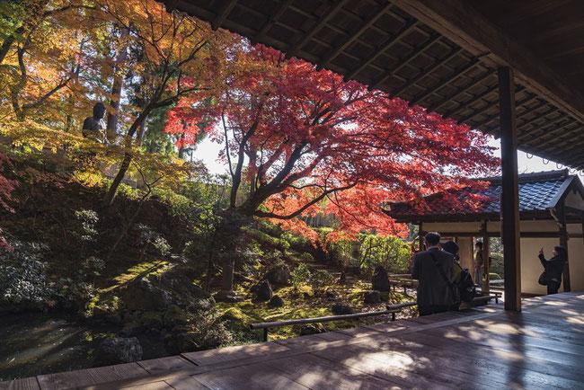 京都の穴場紅葉スポット栄摂院