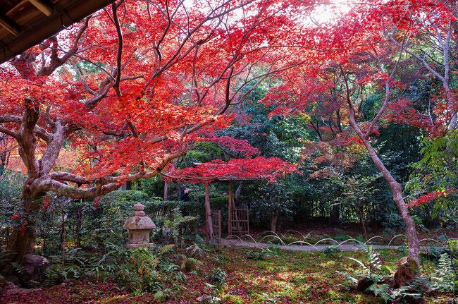 嵐山・厭離庵の紅葉
