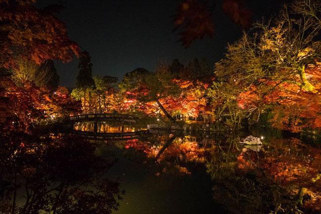 京都の紅葉ライトアップ 永観堂もみじ