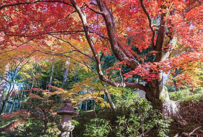 栄摂院の庭の紅葉