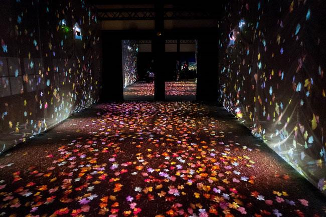 「ライトアップFLOWERS BY NAKED 2018-京都・二条城-」落ち葉の小径