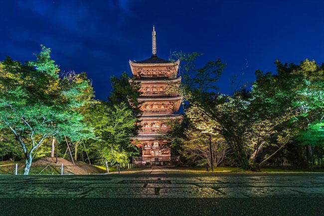 仁和寺青紅葉ライトアップの五重塔