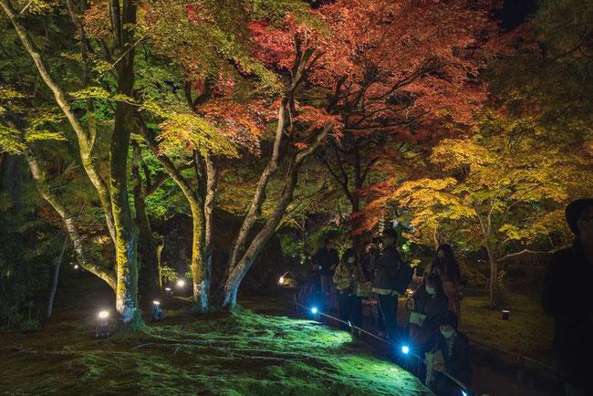 宝厳院の紅葉のライトアップ