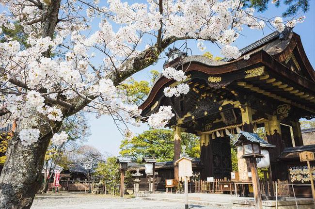 (京都桜の穴場)豊国神社の桜