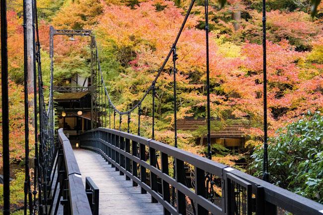 高雄神護寺 紅葉・高雄観光ホテルつり橋