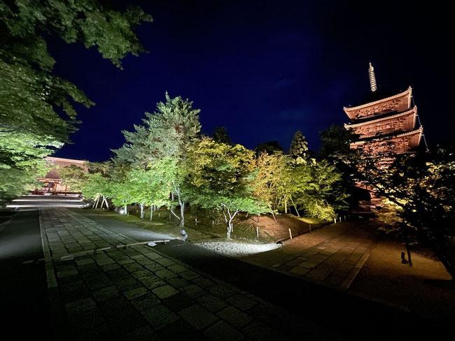 仁和寺青紅葉ライトアップ金堂と五重塔