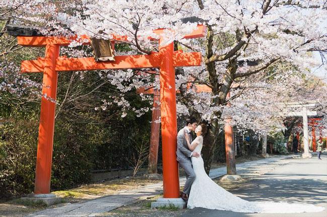 (京都桜の穴場)竹中稲荷神社の桜中国人ウェディングフォト