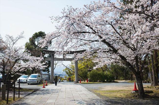 (京都桜の名所)秀吉のお墓「豊国廟」の桜