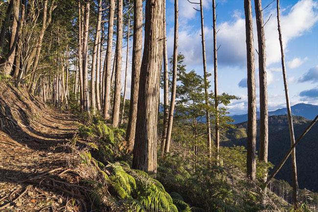 熊野古道赤木越え