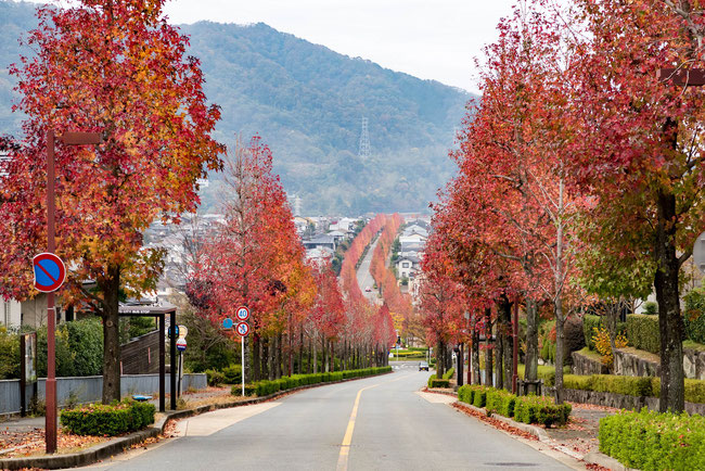 京都 桜坂 紅葉