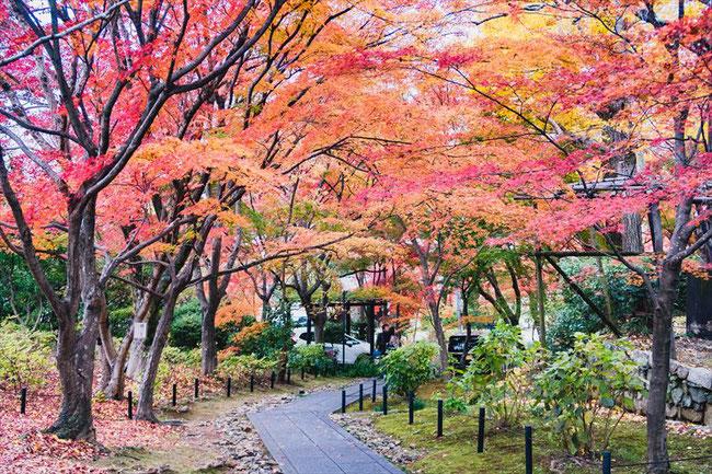 京都真如堂の紅葉