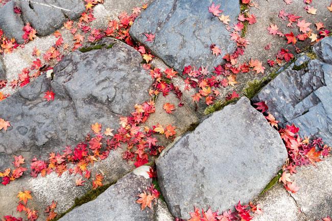 高雄神護寺 石階段の紅葉