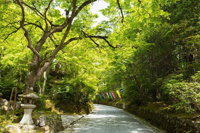 新緑の赤山禅院参道
