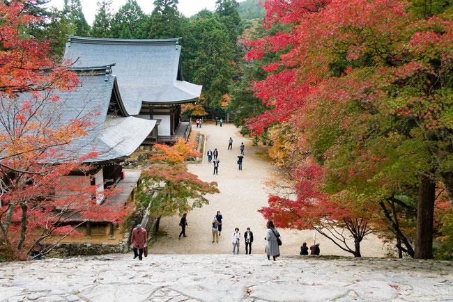高雄神護寺 紅葉・階段