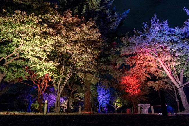 「ライトアップFLOWERS BY NAKED 2018-京都・二条城-」紅葉ライトアップ