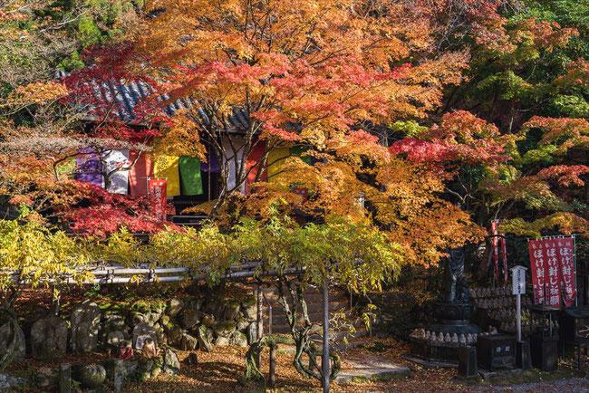 秋の今熊野観音寺のもみじ