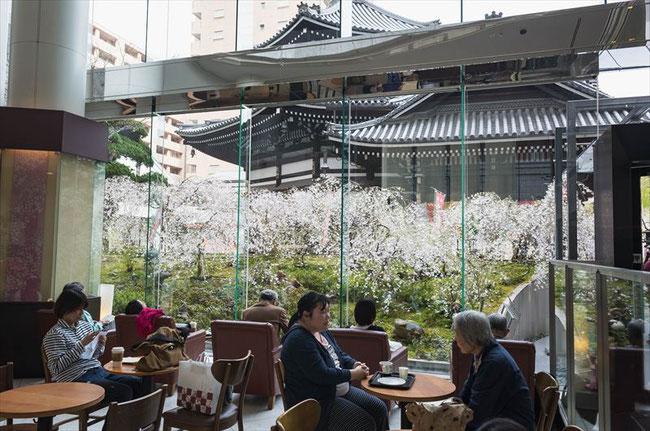 (京都桜の名所)六角堂のスタバから見る桜