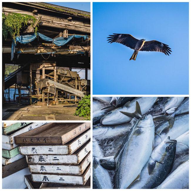 兵庫県竹野漁港