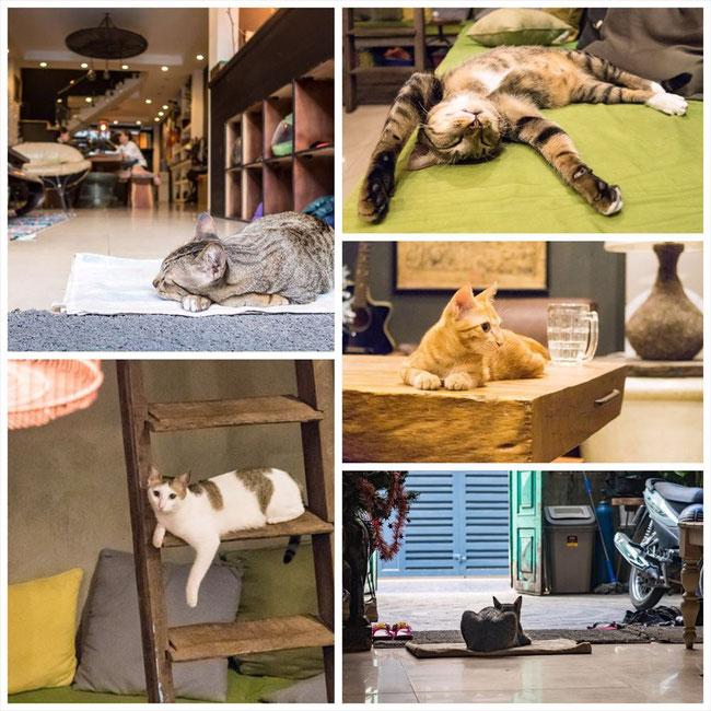 (ホーチミン)The Common Room Project(ゲストハウス)猫