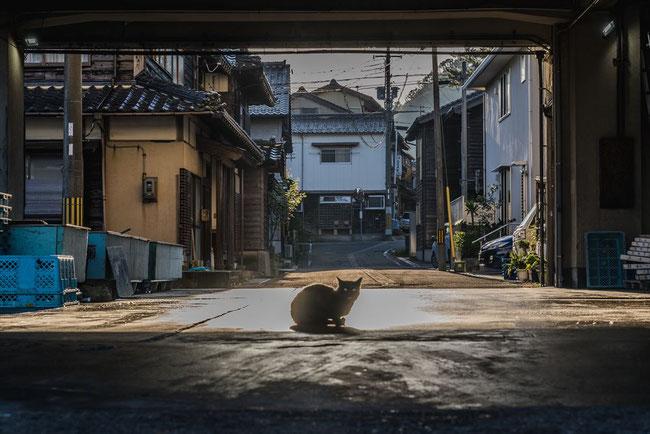 兵庫県竹野漁港と猫