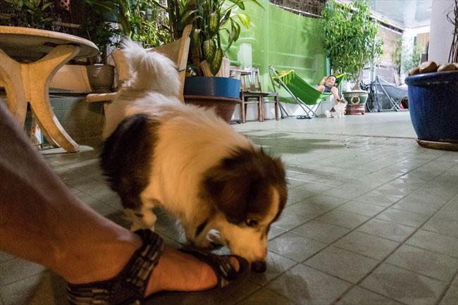 (ホーチミン)onetel hostel(ゲストハウス)犬