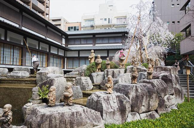 (京都桜の名所)六角堂の桜