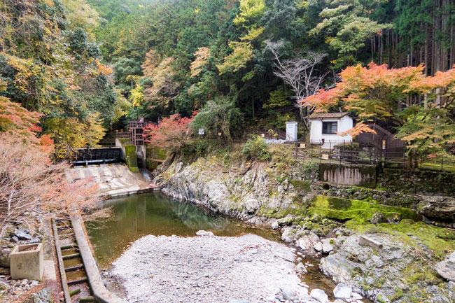 高雄紅葉 京都トレイル北山西部コース