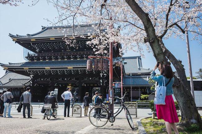 (京都桜の穴場)東本願寺の桜