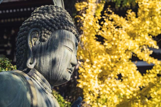金戒光明寺の仏像と銀杏
