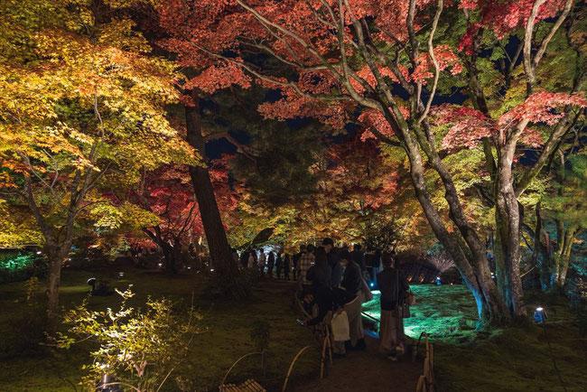 秋の嵐山宝厳院の紅葉ライトアップ