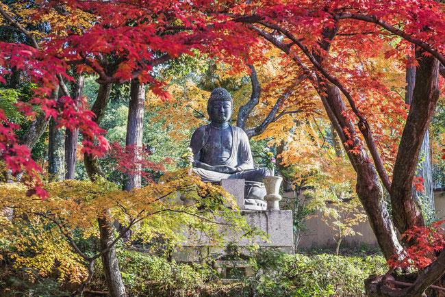 栄摂院の紅葉と釈迦座像